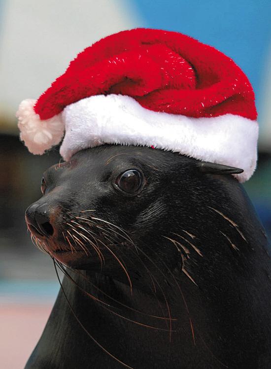 戴着圣诞帽的小动物十分可爱