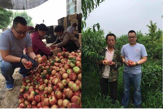 关注原产地水果产业一米鲜爱心油桃一天售10吨_fina