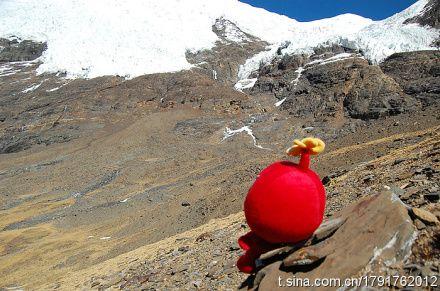长安花花开西藏的雪山下