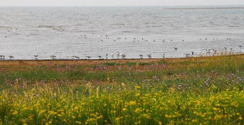 红碱淖湿地正面临干涸,流域野生动植物保护形势严峻。遗鸥作为世界濒危物种、国家一级重点保护鸟类,也亟须得到有效保护。资料图片