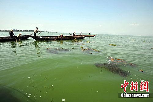 图为滇池水面上有许多村民放置的非法捕鱼工具。中新社发 任东 摄