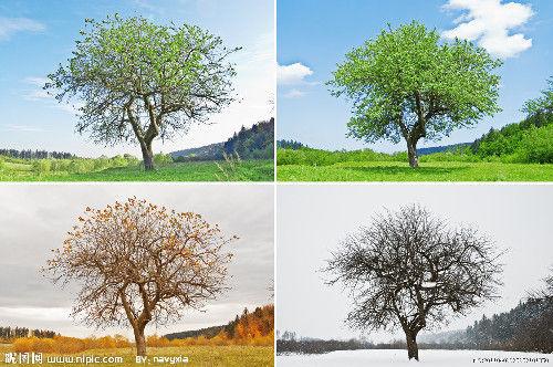 春夏秋冬,万物更迭图片