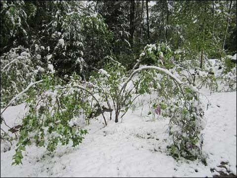 中国天气网讯 据美国天气网27日报道,在刚刚过去的阵亡将士纪念日周末,美国新英格兰地区北部和纽约州北部高海拔山区出现暴雪。   5月24至26日,纽约州北部、佛蒙特州北部和新罕布什尔州北部海拔1500英尺(457米)以上的地区测得降雪。   纽约州阿迪隆达克山区积雪逾3英尺(约91厘米),导致附近公路被迫关闭。佛蒙特州北部曼斯菲尔德山区的降雪量达13.