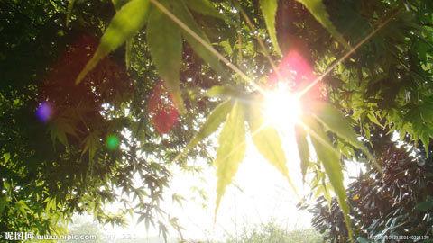 美最新研究发现 早起晒太阳身材好(图片来源于昵图网)