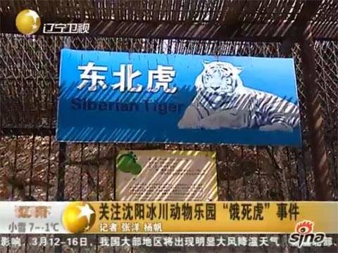 沈阳野生动物园11只东北虎营养不良死亡 br>