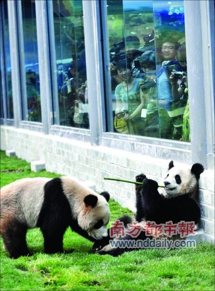 昨天下午,北京动物园熊猫新馆,市民和记者争睹从卧龙转运出的奥运大