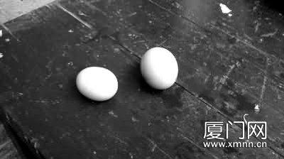 """小母鸡生下绿壳""""神蛋"""""""