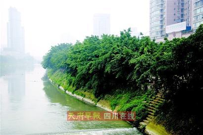 滨江路的参天大树保住了