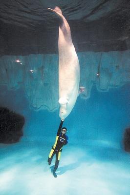 壁纸 动物 海底 海底世界 海洋馆 水族馆 鱼 鱼类 266_400 竖版 竖屏