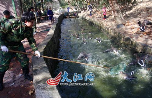 大江网讯 记者 喻云亮报道:随着南昌朝阳洲新动物园开园