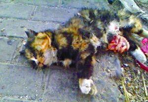 小区12只流浪猫遭开膛破肚 志愿者夜守虐猫人