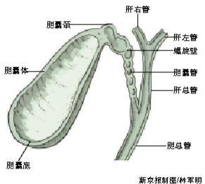 熊去氧高中溶石不证明就读v高中(1)胆酸取代手术图片