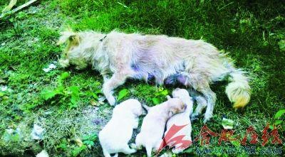 残忍图片:宠物狗出门惨被打死 凶手竟然留条炫耀