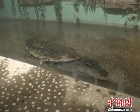 """郑州动物园平安夜上演""""游园惊梦""""(图)"""