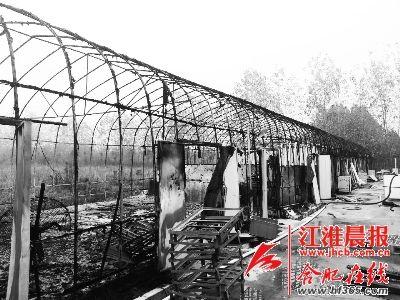 农业大棚凌晨着火(图)
