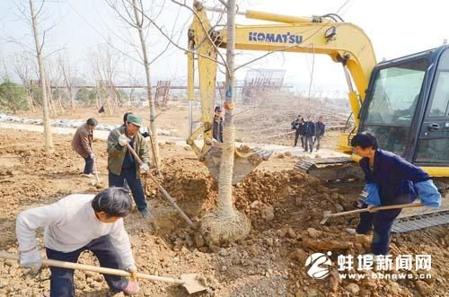 """蚌埠龙子湖北公园""""小植物园""""加快建设(图)"""