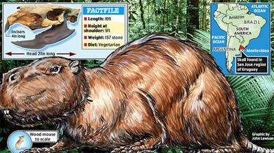 科学家发现400万年前高1.5米重1吨老鼠化石