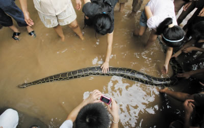 女子扛蟒蛇到江边为其洗澡吓跑市民(图)