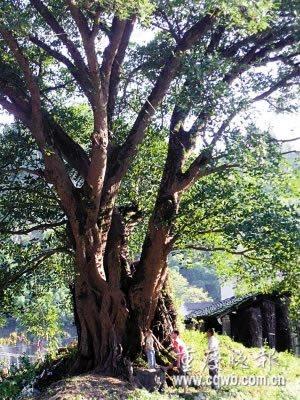传教士绘油田分布图百年后当地发现特大气田