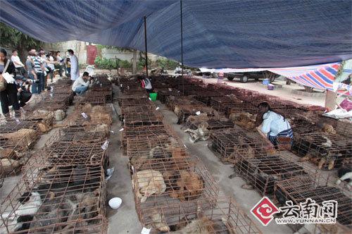 505只狗狗卸在派出所院子里 刘筱庆 摄