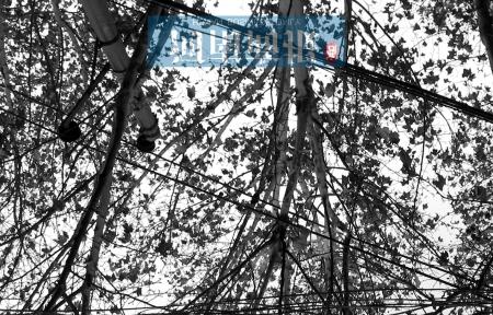 男子往树上抹鼻涕被电倒(组图)