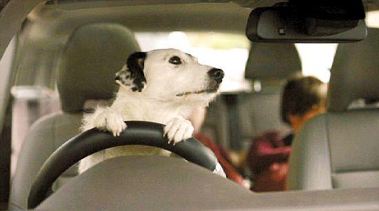 开车接小孩子放学