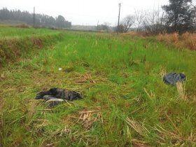 万物复苏,农田里都长满了青草。