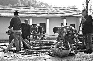 12月11日,陶河福利院的老人们把木头锯成小段,储存起来供生火做饭用。本报记者 朱柳笛 摄