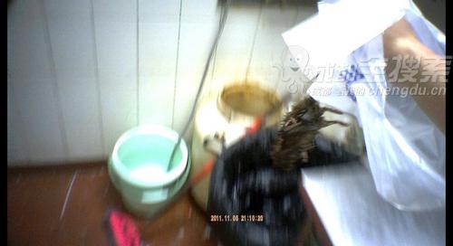 厨房内的死老鼠