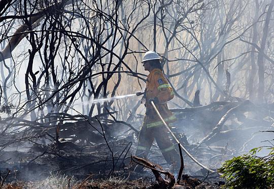 澳大利亚森林大火已致65人死亡(组图)