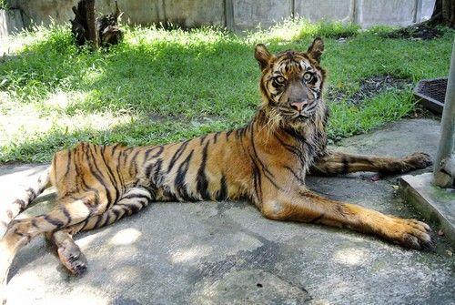 印尼一动物园环境恶劣 大量珍稀物种濒临死亡