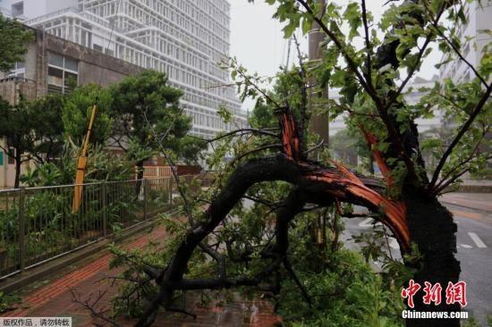 """当地时间7月8日,日本冲绳,超强台风""""浣熊""""袭击日本,那霸市树木被风吹断。"""