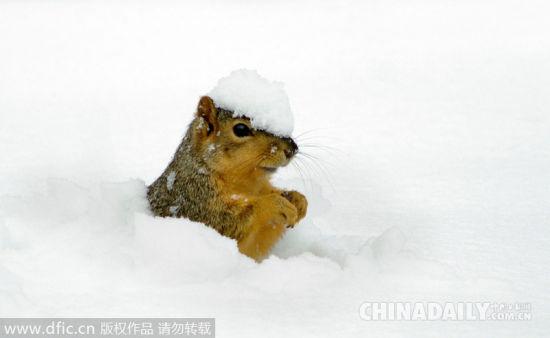 看看动物们如何在雪地里撒欢卖萌[1]