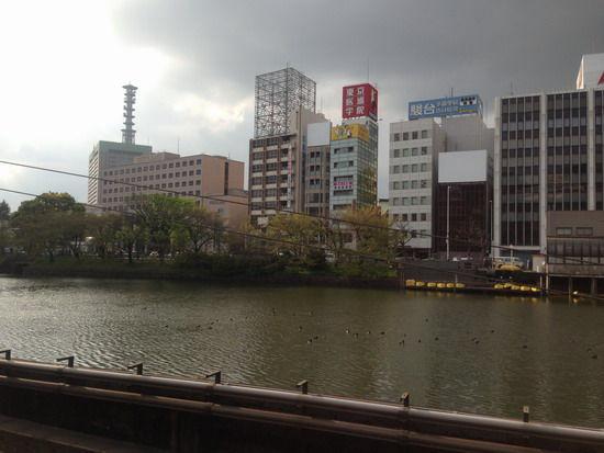 日本防卫省外的河里鸭子安详游动