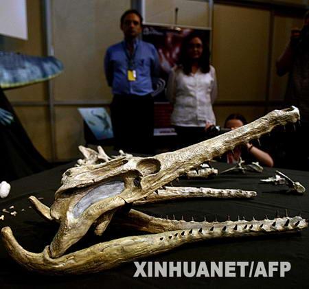 组图:巴西展出海洋鳄鱼骨骼化石