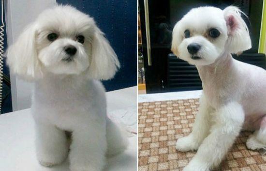 是狗狗,目前最受欢迎的包括能让宠物看上去更可爱的