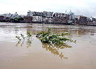 洪水淹没了河边的小树