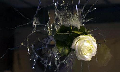 当地时间2015年11月14日,法国巴黎,一朵白色玫瑰插在前夜恐怖袭击中留下的弹孔上,封住弹孔却遮不住裂痕。