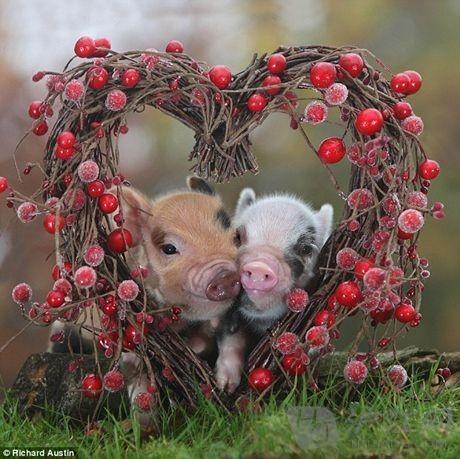 两只可爱的小猪仔
