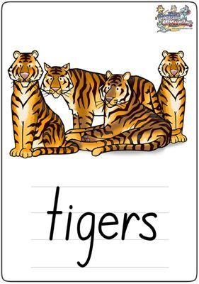 """英语学习卡片""""tigers"""""""