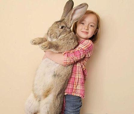 世界上最可爱兔子
