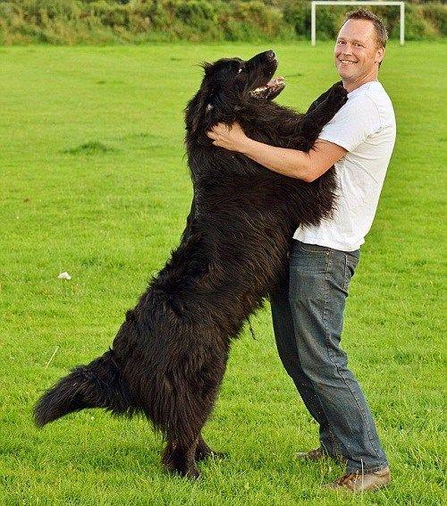 1.76公斤重的泰德和它的主人