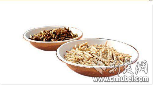 待制作的蝗虫(左)和竹虫食材