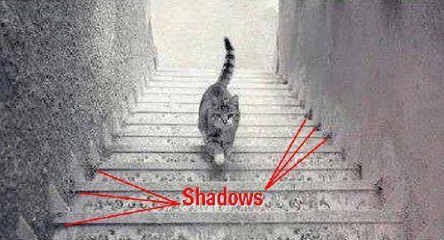猫究竟是在上楼还是下楼