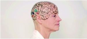 把头发剃光后,坎韦施请女助教在她的光头上画上大脑纹路,让同学更直观了解大脑结构。