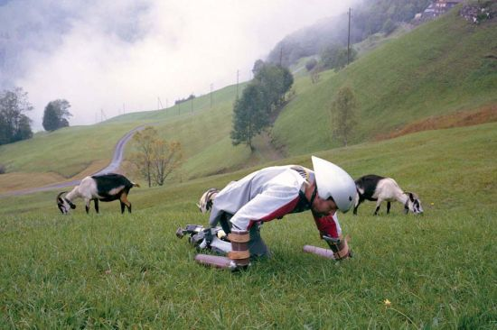 托马斯和羊群一起吃草。(网页截图)