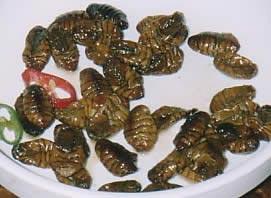 世界各地的诡异食物:白蚁卵等(组图)