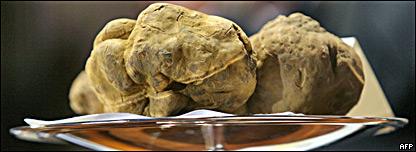 A white truffle