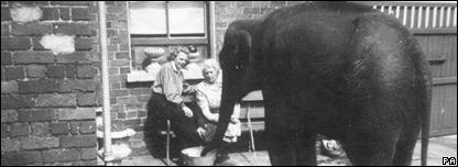 An elephant in a backyard during the Belfast Blitz