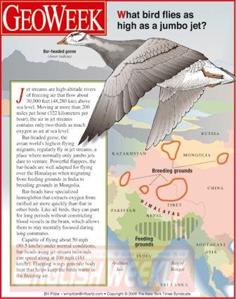 哪种鸟和喷气式客机飞得一样高(图)